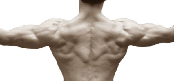 muscle definition cutting diet